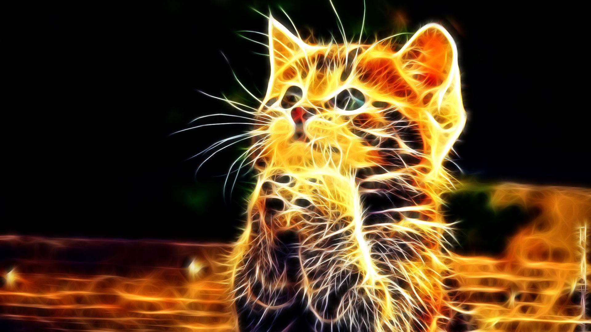 Praying Cat Free Wallpapers High Resolution Wallpaper