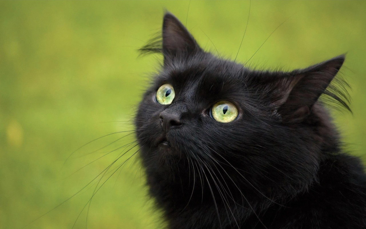 Black Cat With Green Eyes Cute 453796 Hd Wallpaper Backgrounds Download