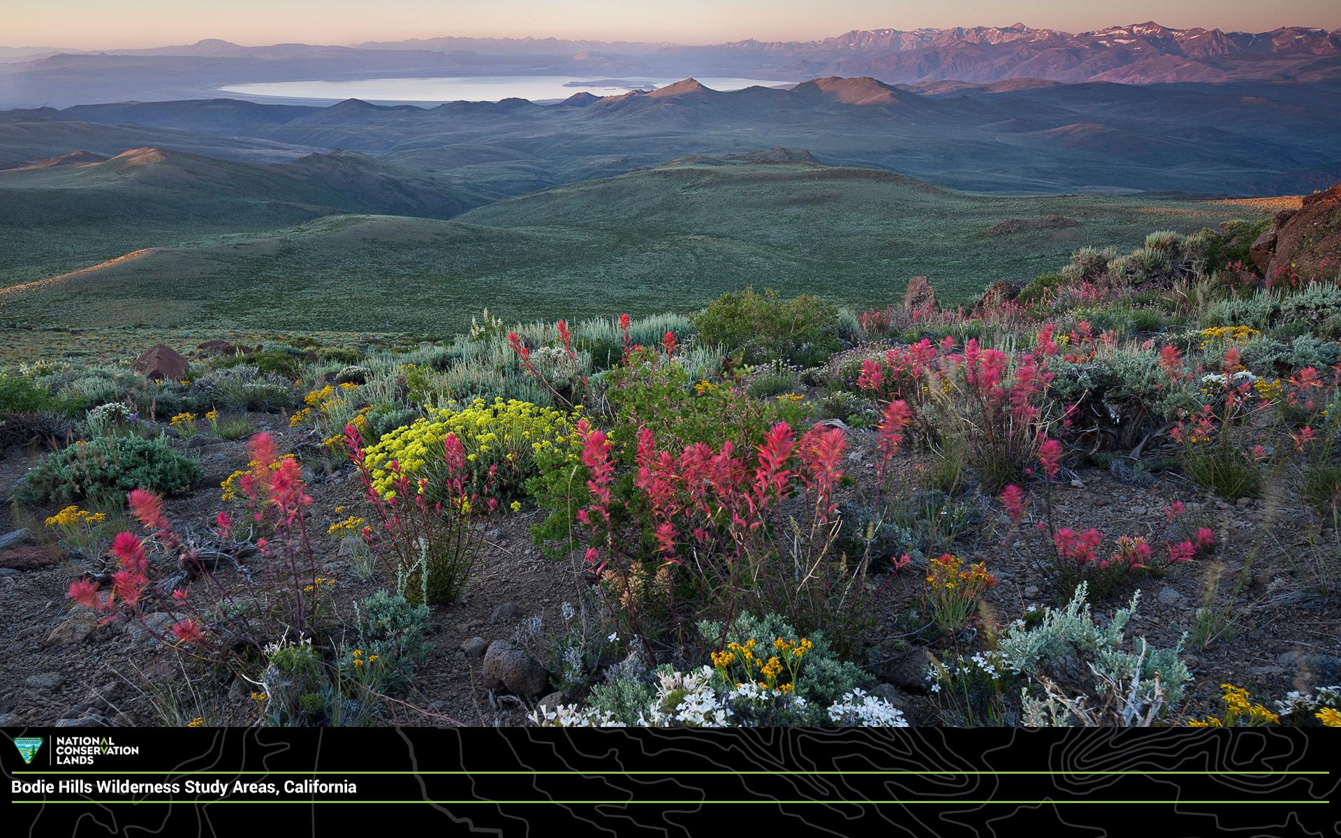 April Conservationlands15 Social Media Takeover Download - Sagebrush Bloom , HD Wallpaper & Backgrounds