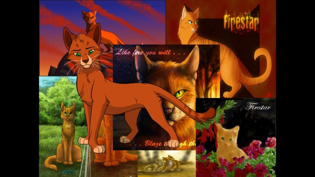 Here Are Some Warrior Cats Wallpaper Warrior Cats Firestar