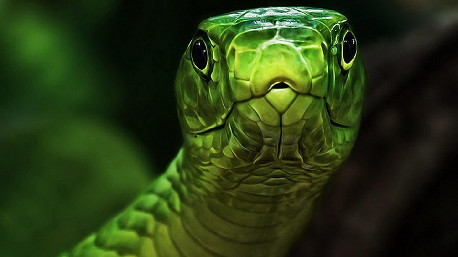 Green Snake Hd Wallpaper - Close Up Snake Face , HD Wallpaper & Backgrounds