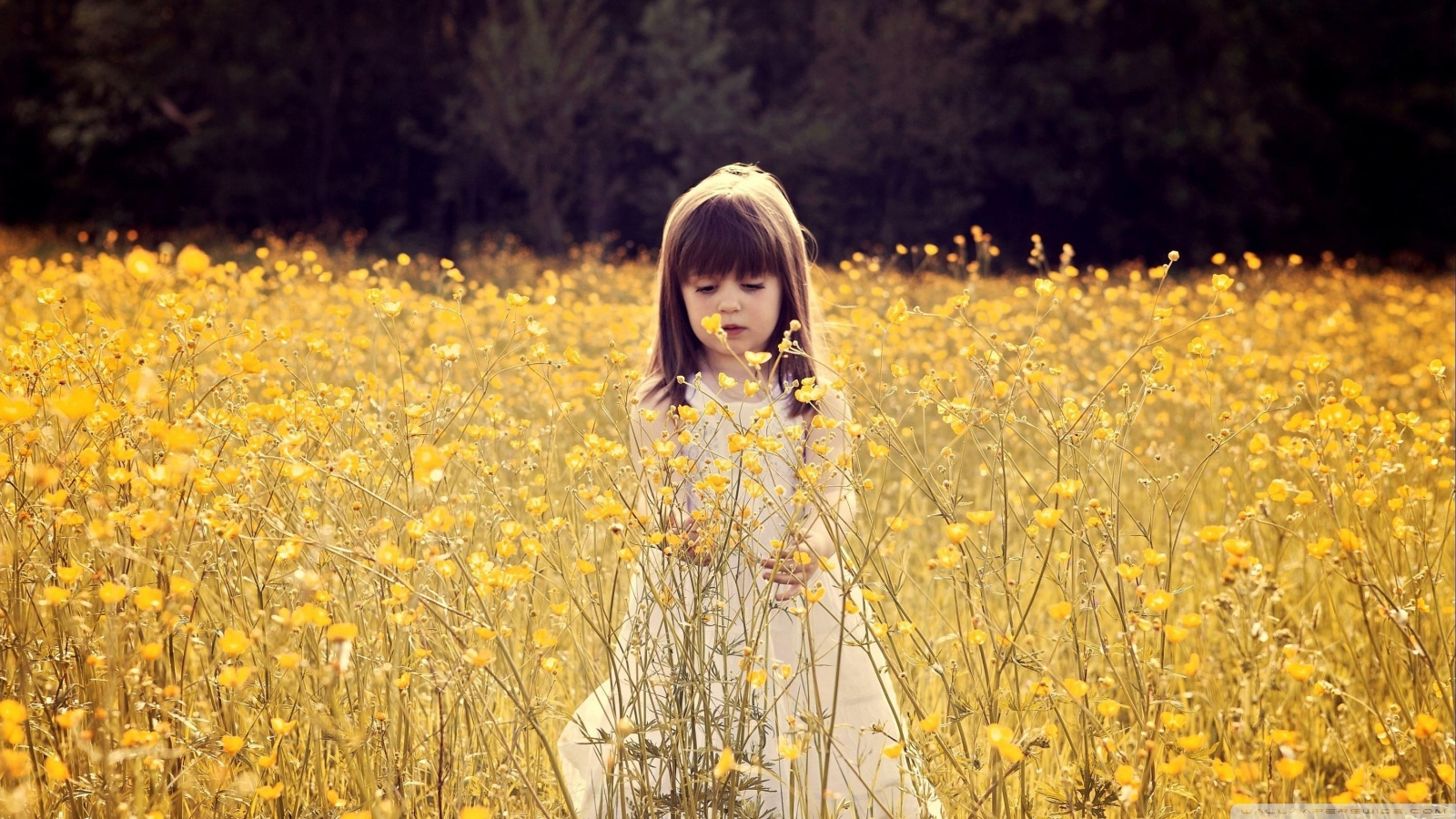Hd 16 - - Little Girl In Flower Field , HD Wallpaper & Backgrounds