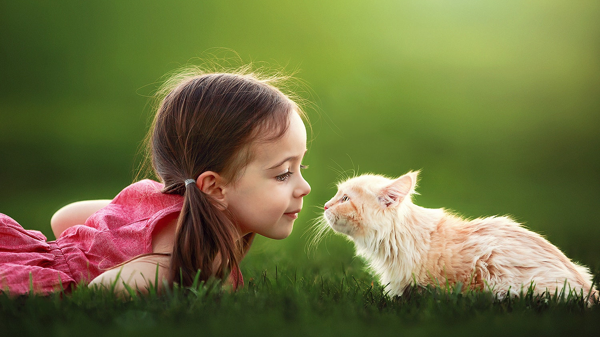 Wallpaper Cat, Baby Girl, Face Off - Cute Girl With Animal , HD Wallpaper & Backgrounds