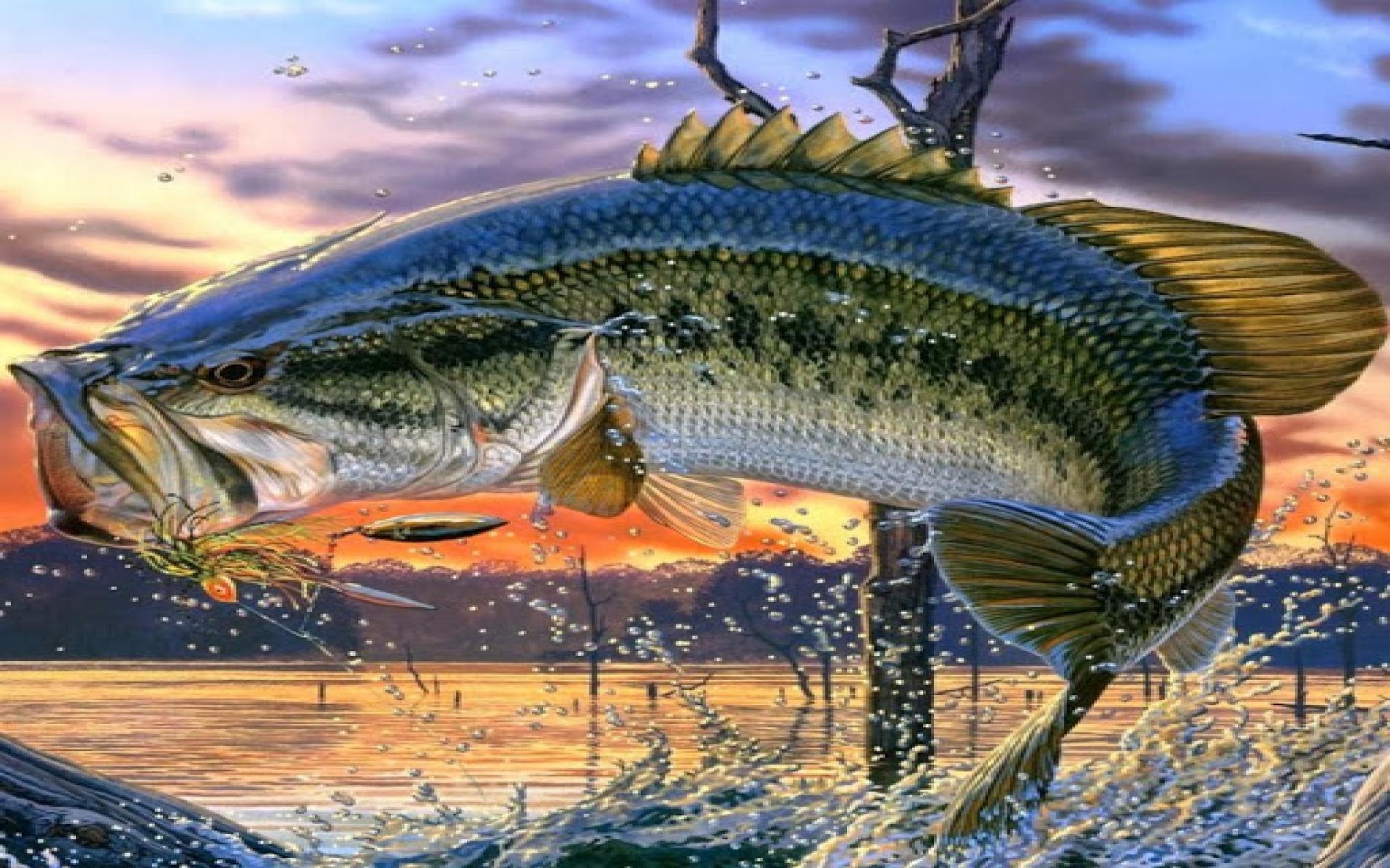 Largemouth Bass Fishing Wallpaper T4hg9sj Bass Fishing Screen Saver 460612 Hd Wallpaper Backgrounds Download