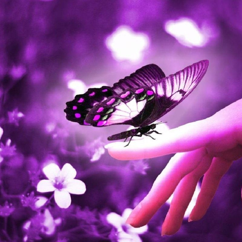 10 Most Popular Beautiful Wallpapers Of Butterflies - Most Beautiful Wallpapers For Facebook , HD Wallpaper & Backgrounds