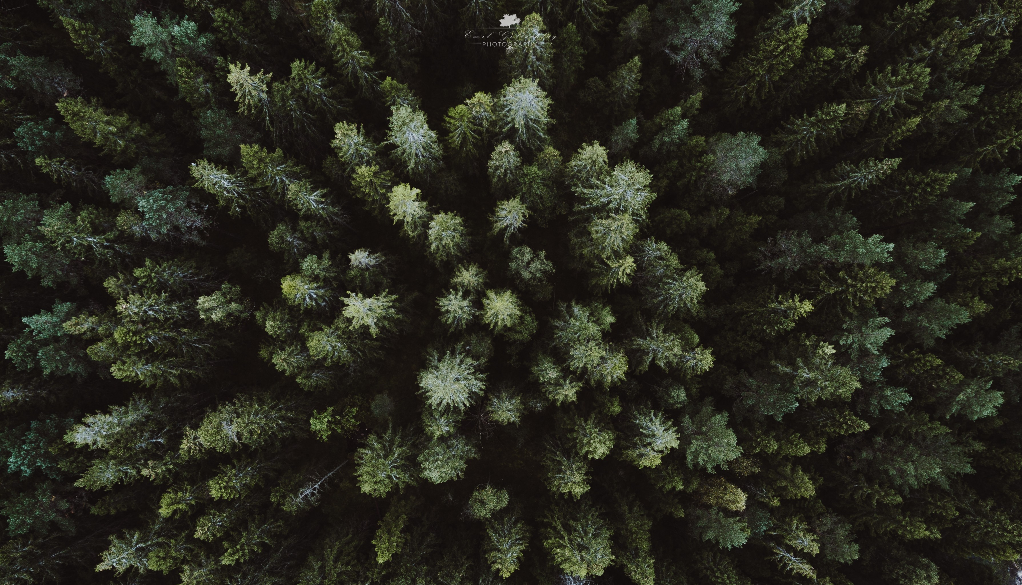 #landscape, #drone, #forest, #aerial View, Wallpaper - Drone View Of Forest , HD Wallpaper & Backgrounds