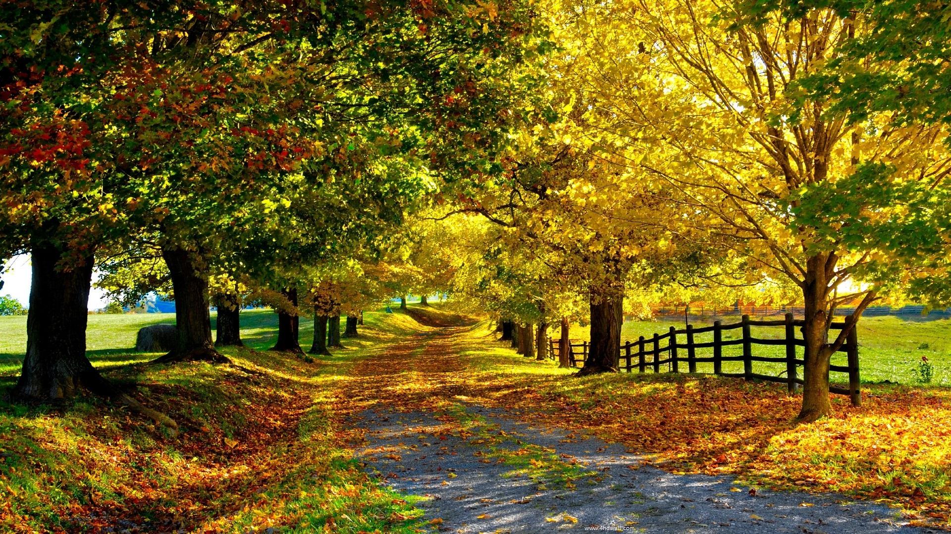 Fall Season Wallpaper Season Wallpaper Hd 478028 Hd