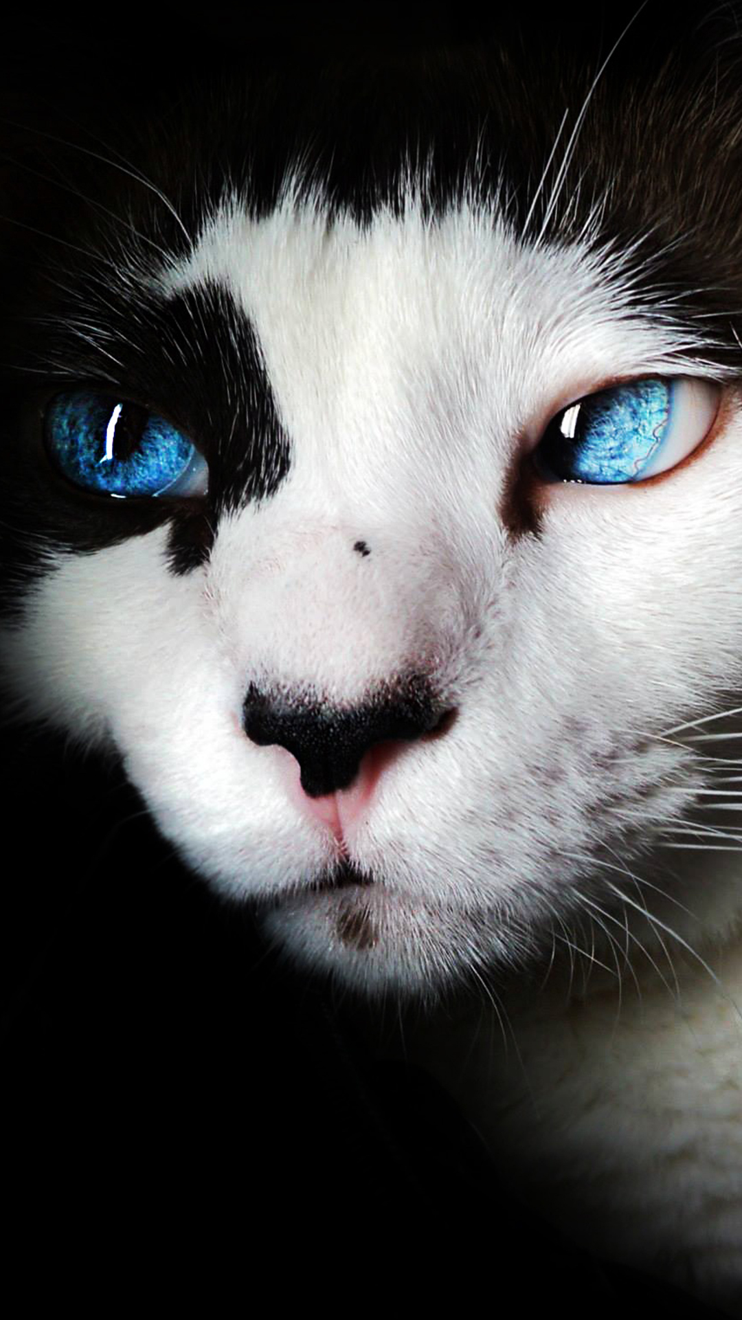 My Best Phone Wallpapers - แมว ตา สี ฟ้า , HD Wallpaper & Backgrounds