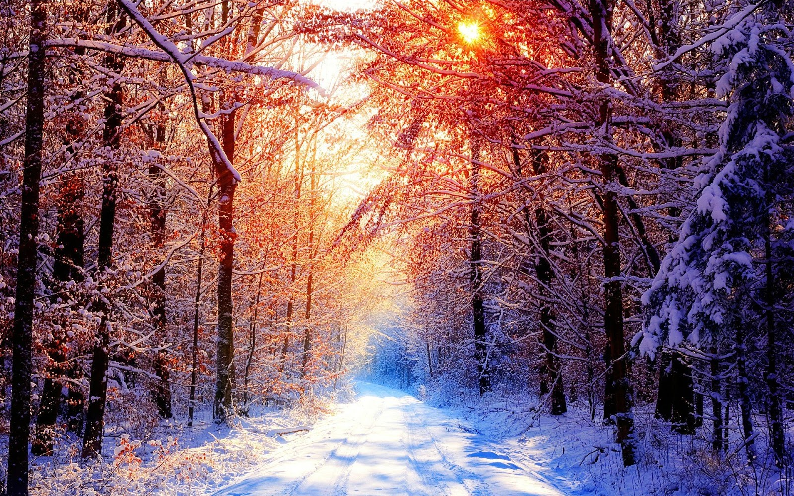 Best 52 Snowfall Wallpapers Fashionwtf Warm Winter 478458 Hd Wallpaper Backgrounds Download