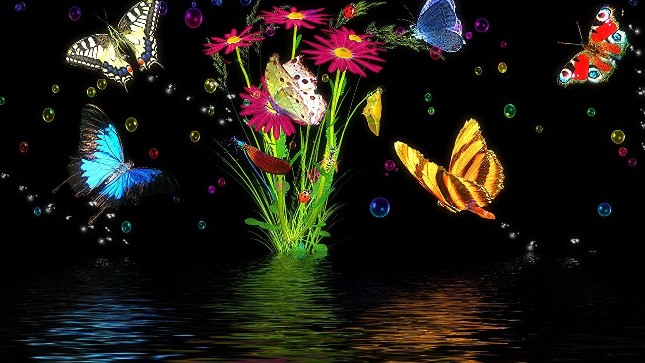 Fondos De Pantalla Para Pc Mariposas , HD Wallpaper & Backgrounds