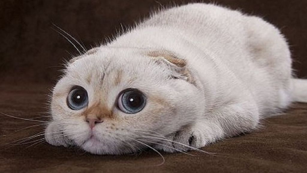 Cute Cats Wallpaper Hd Cute And Funny Cats And Dogs 480255 Hd Wallpaper Backgrounds Download