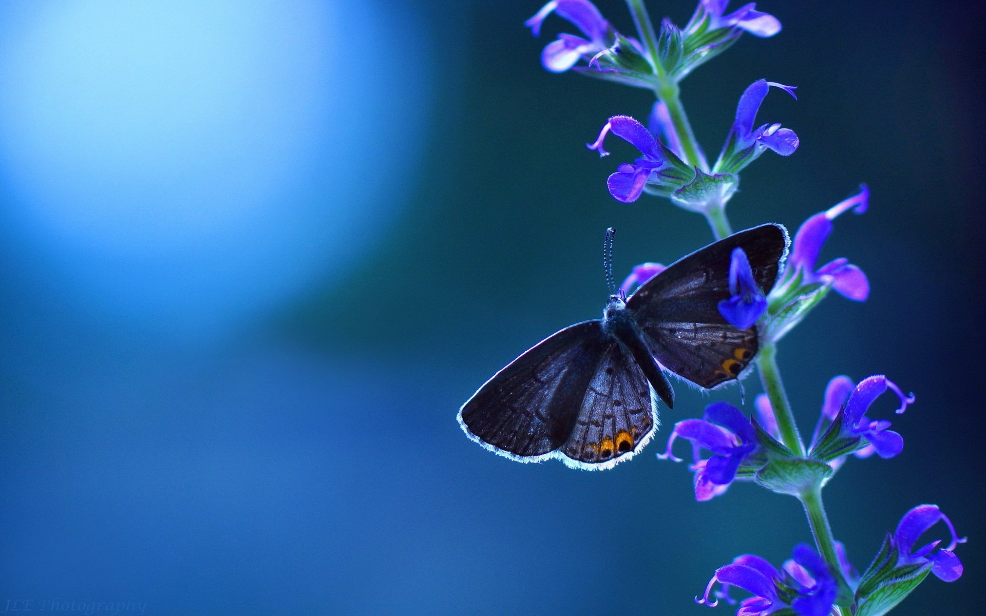 Good Morning Images With Beautiful Butterfly , HD Wallpaper & Backgrounds