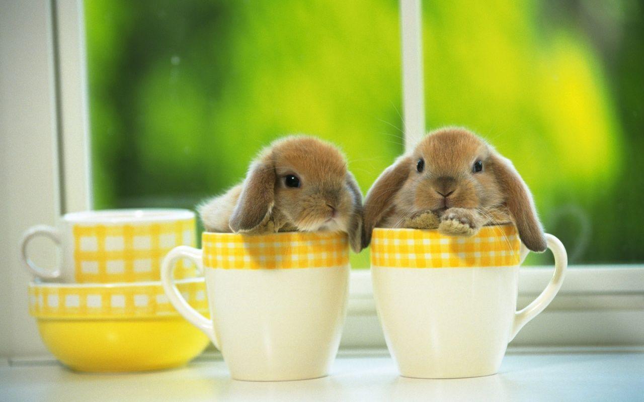 Cute Bunny Wallpaper Mobile Cute Easter Bunny 480648