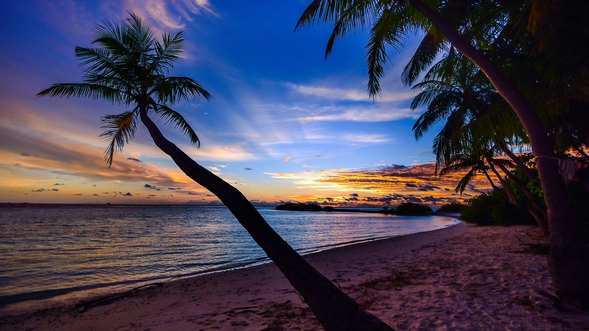 Beach Sunset Desktop Background - Palm Trees Laptop Background , HD Wallpaper & Backgrounds