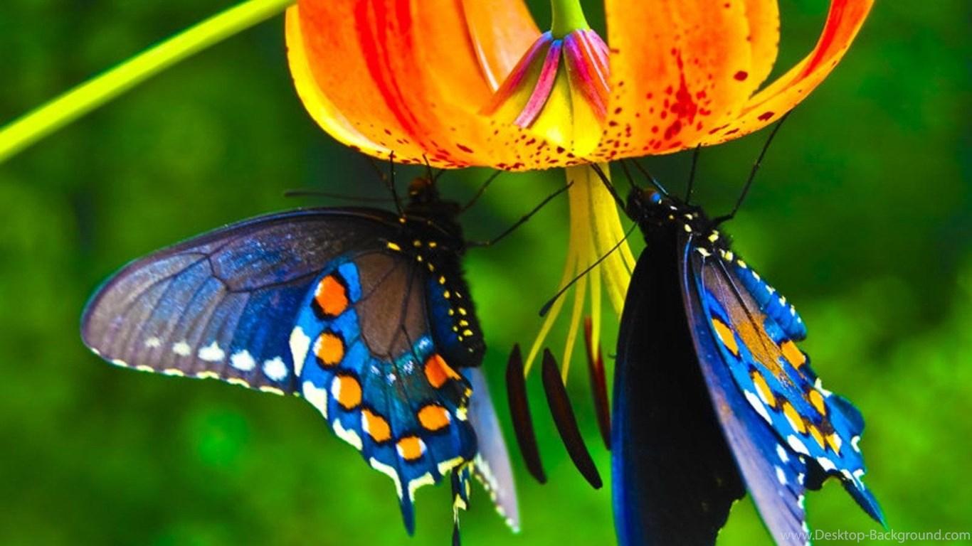 Beautiful Butterfly Colour Hd , HD Wallpaper & Backgrounds