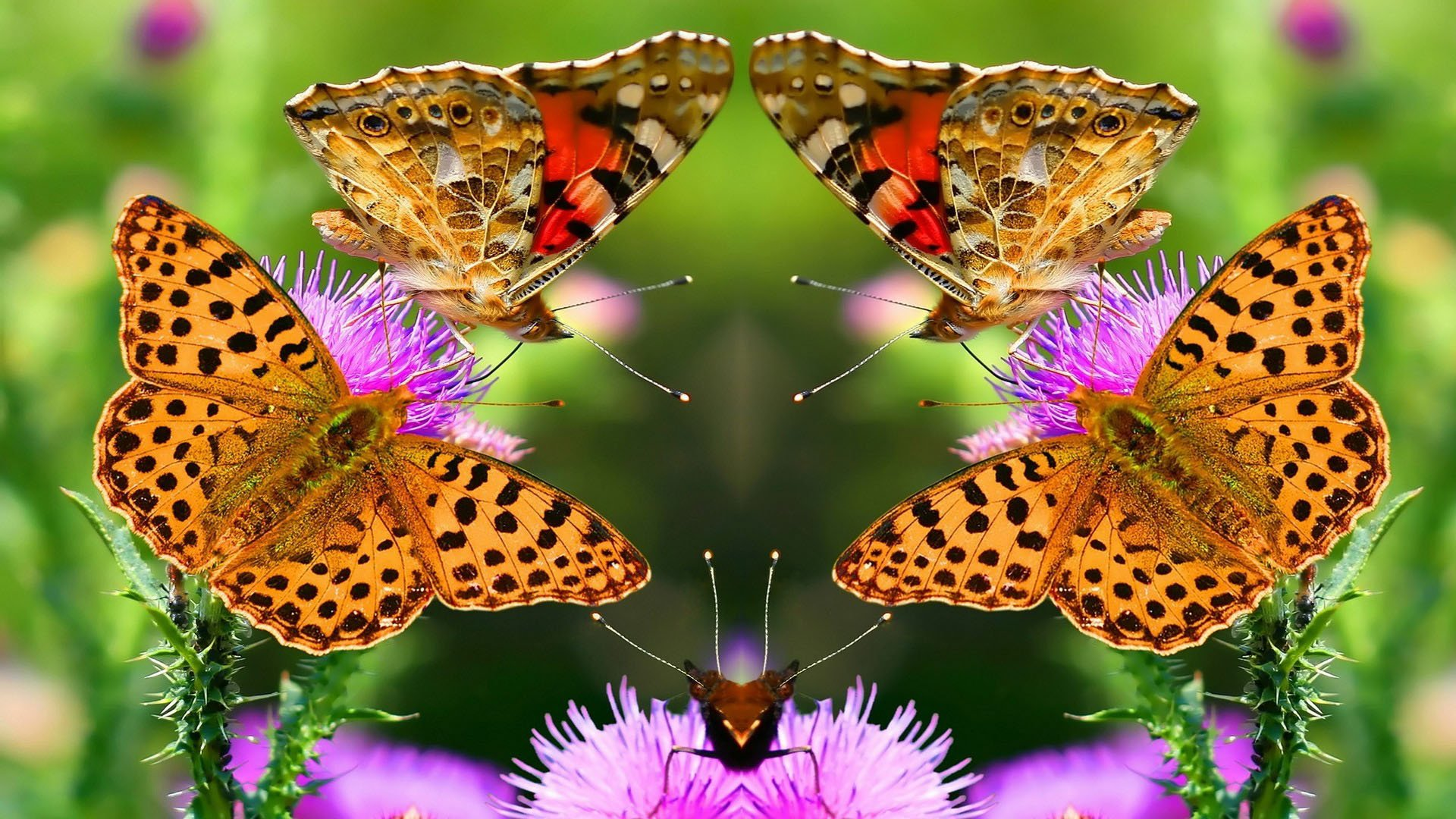 Beautiful Butterfly 8563 Wallpaper - Hd Wallpaper Nature With Animal , HD Wallpaper & Backgrounds