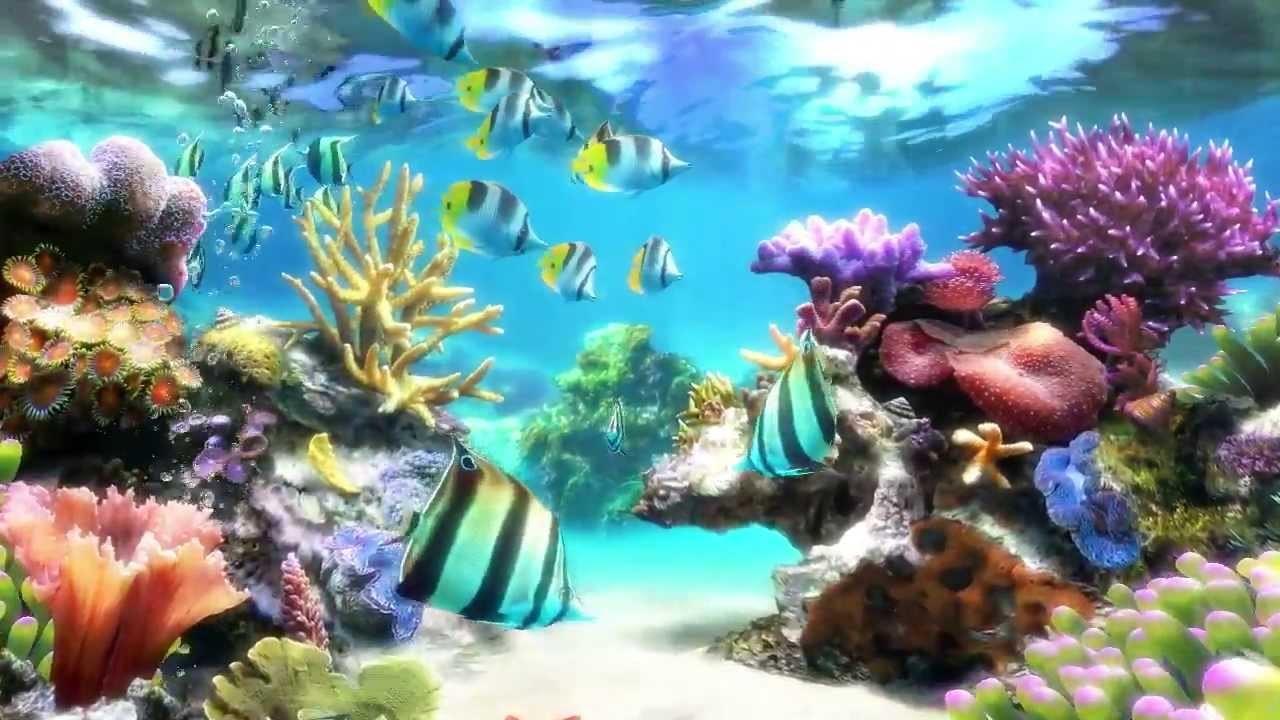 wallpaper sim aquarium screensaver live