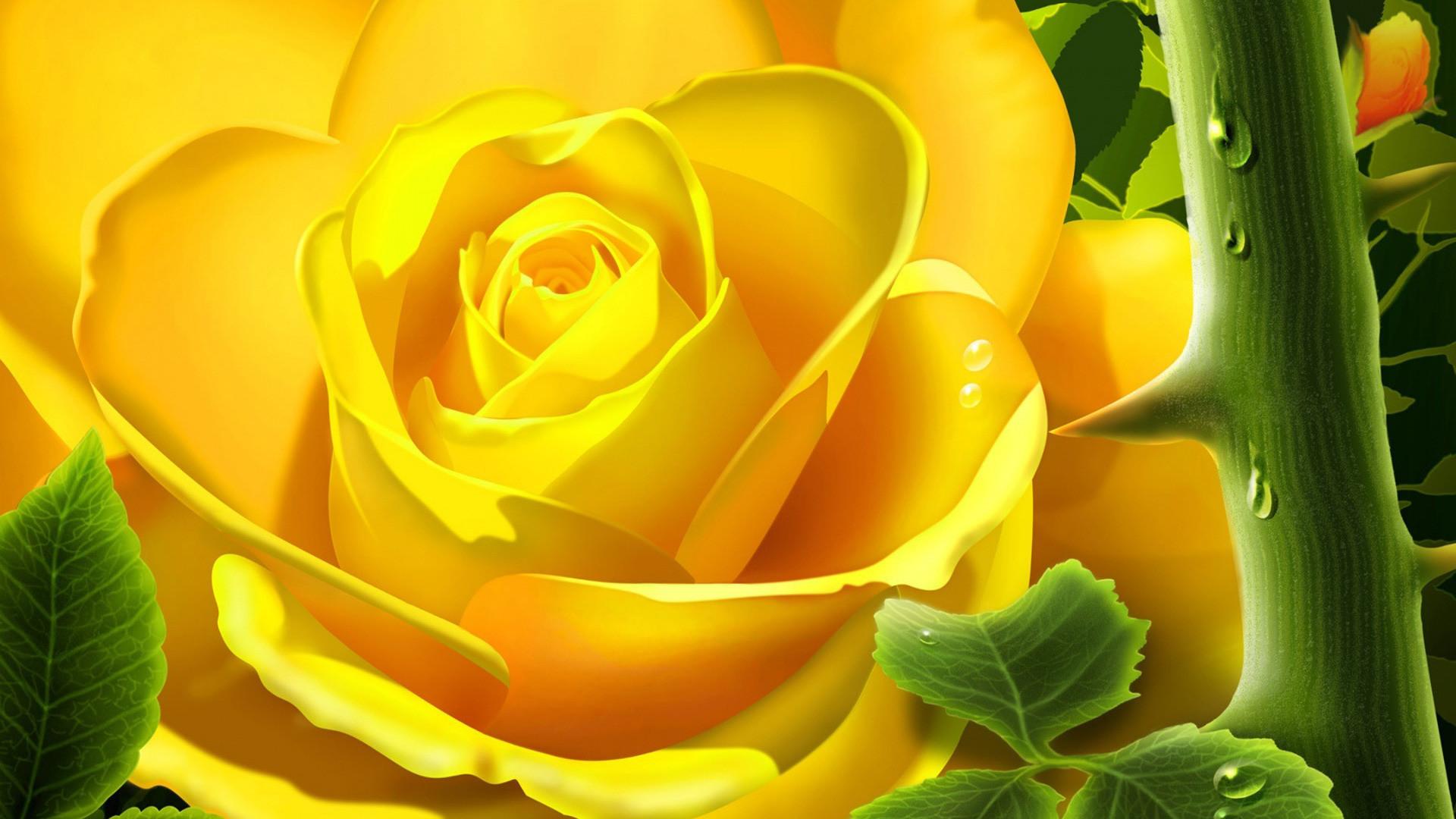 Fxa41 4k Ultra Hd Yellow Rose Wallpapers Yellow Rose - Yellow Rose Good Morning , HD Wallpaper & Backgrounds