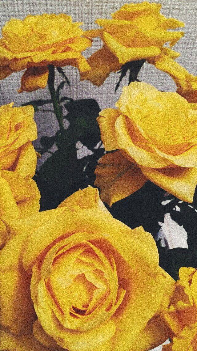 Yellow Rose Wallpaper Yellow Tumblr Lockscreens Aesthetic 498277 Hd Wallpaper Backgrounds Download