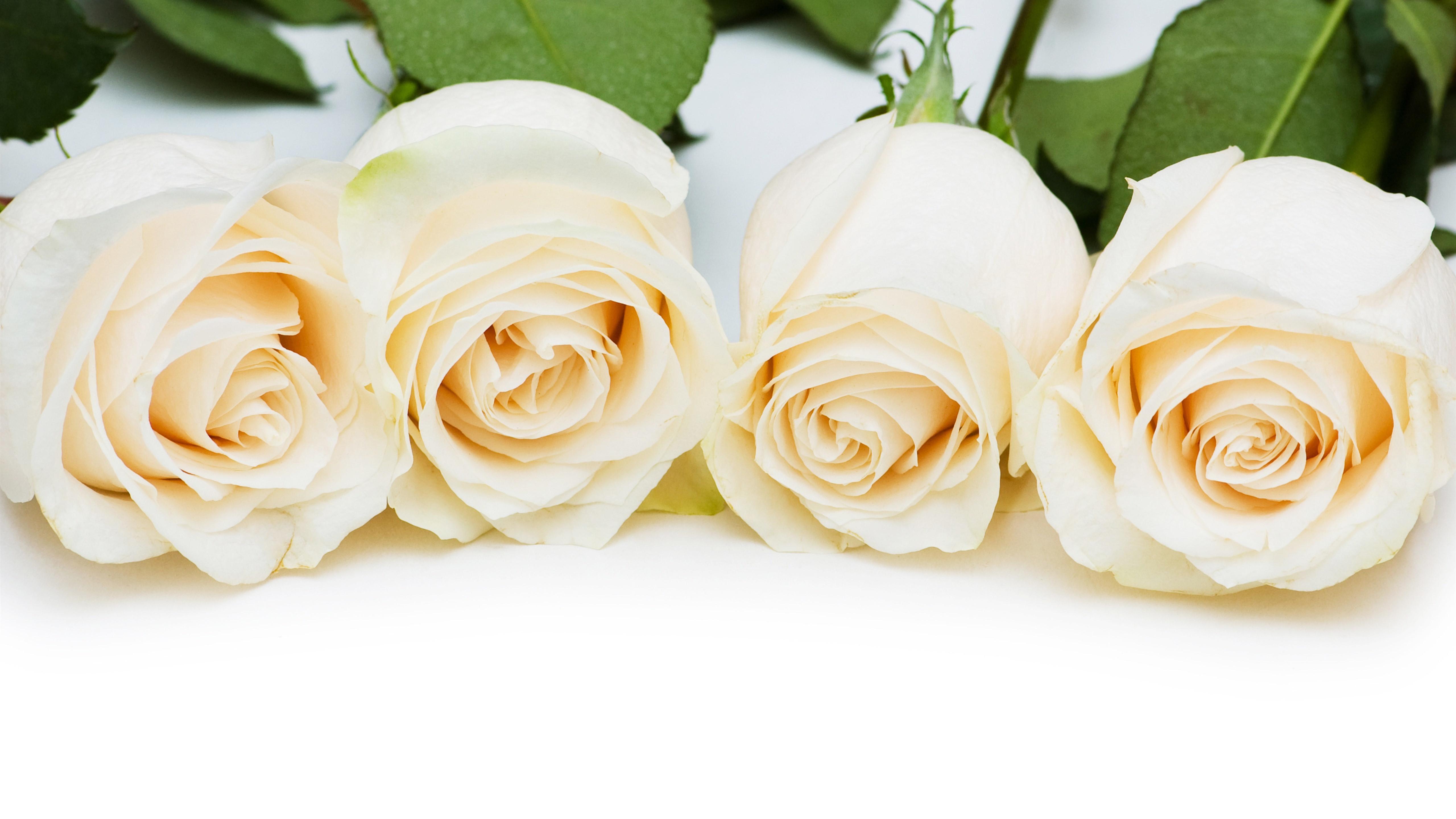 White Rose Wallpaper Best Wallpaper - Beautiful White Rose Flowers , HD Wallpaper & Backgrounds