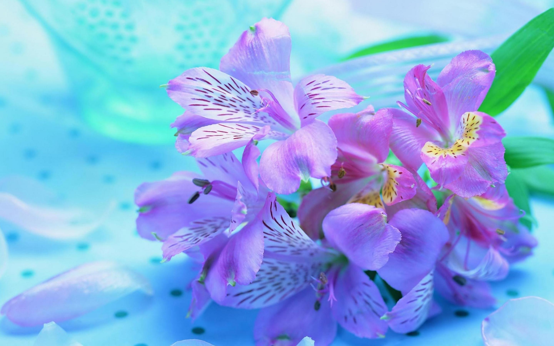 Purple Plant Stripe Wallpaper Hd - Beautiful Wallpapers Flowers , HD Wallpaper & Backgrounds