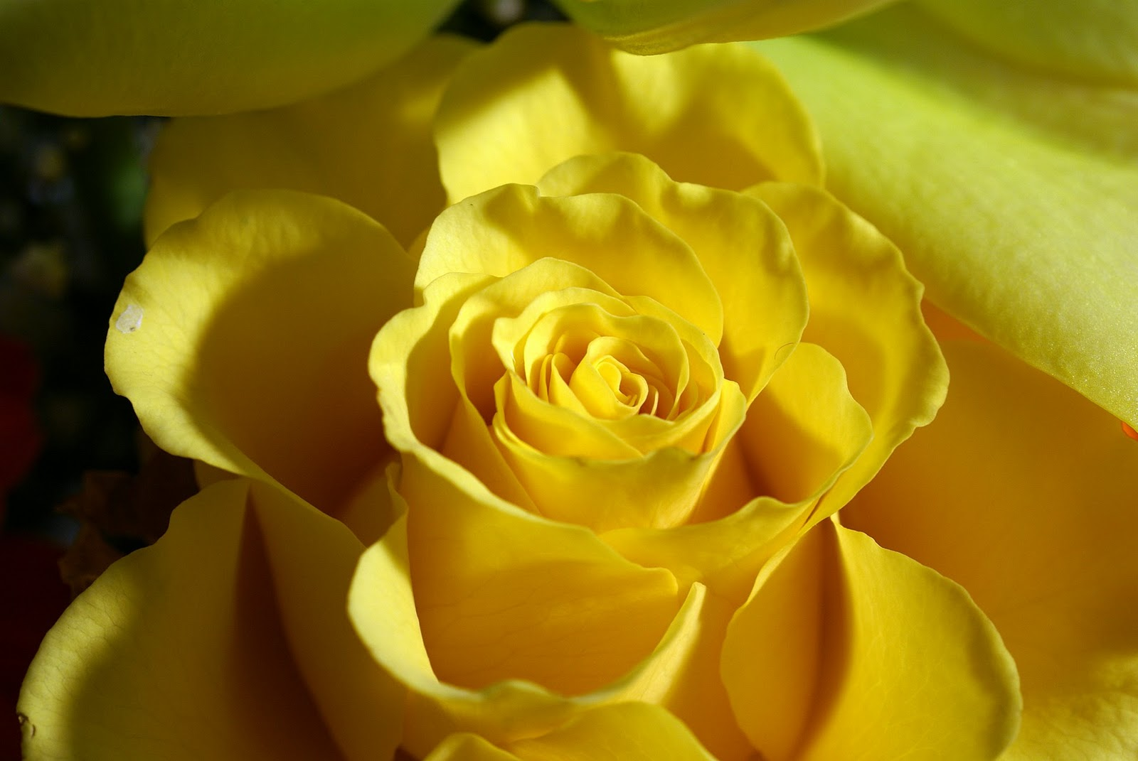 Timeline - Hd Images Of Yellow Flowers , HD Wallpaper & Backgrounds