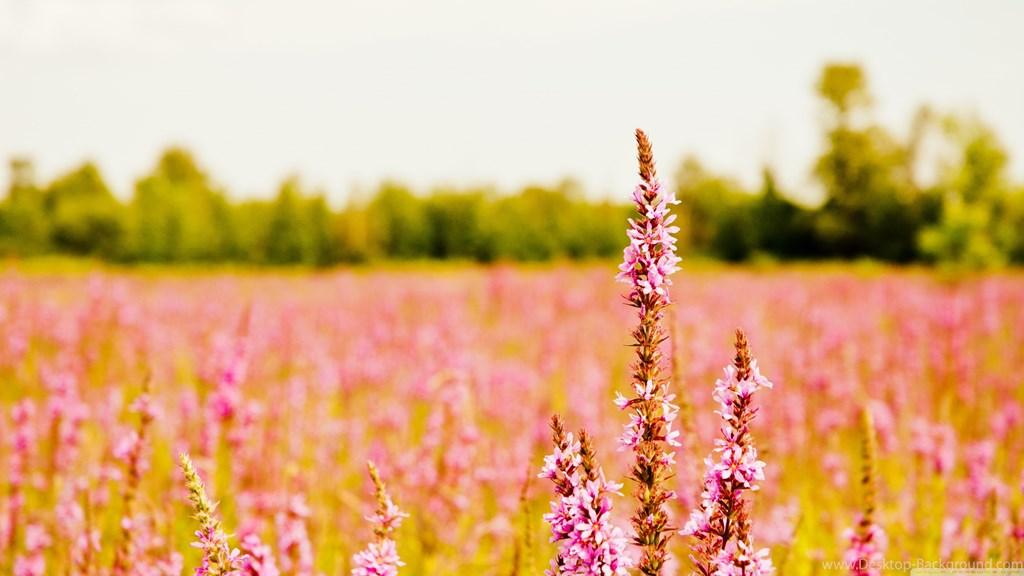 Linkedin Background Photo Flower , HD Wallpaper & Backgrounds