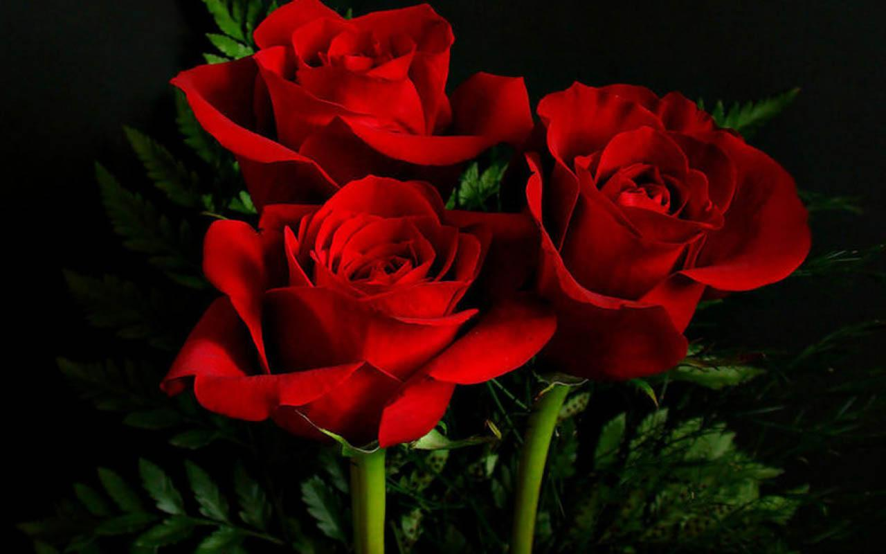 5 58976 3d rose live wallpaper