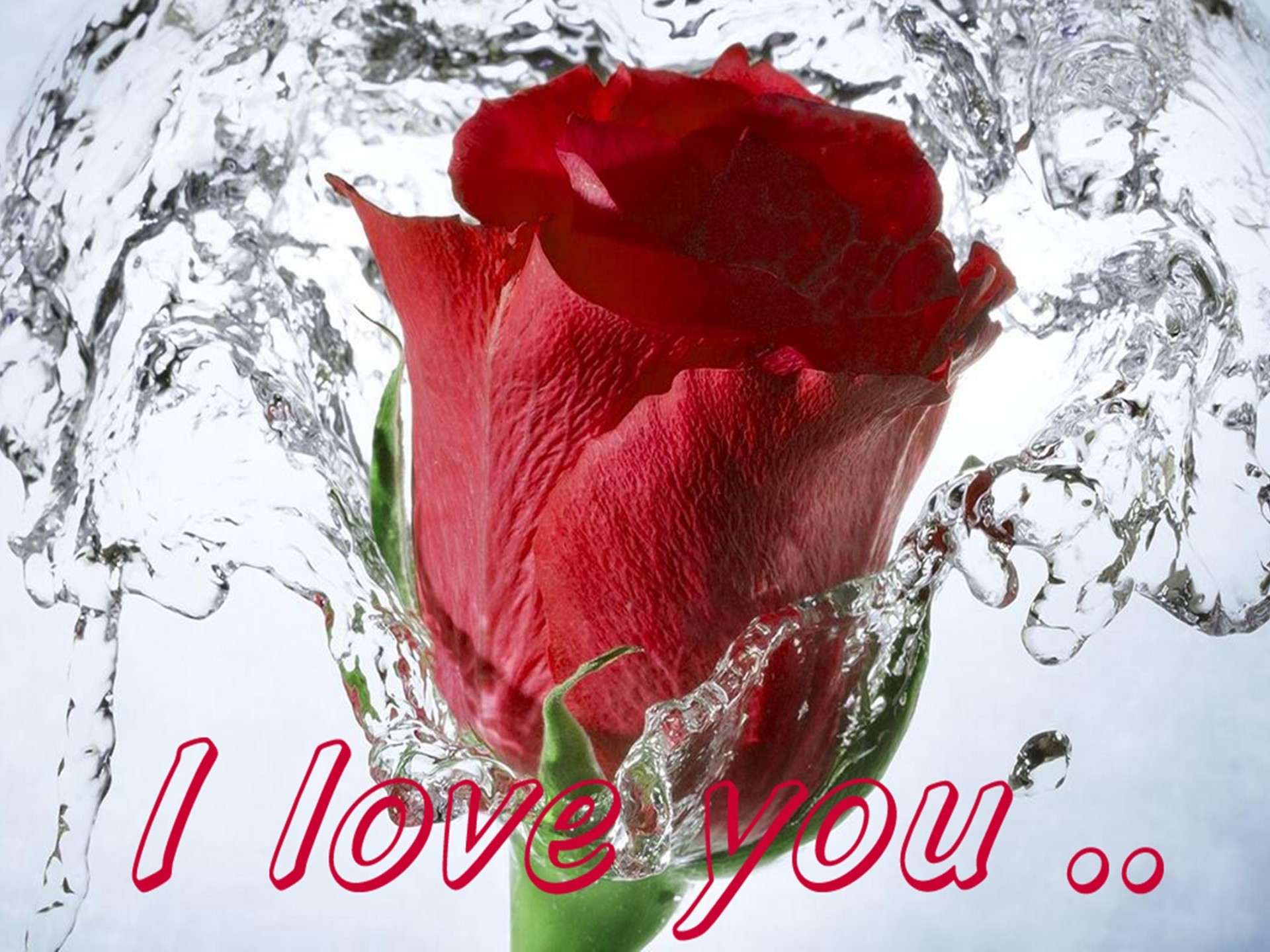 Red Rose Wallpaper Hd - Red Rose I Love U , HD Wallpaper & Backgrounds