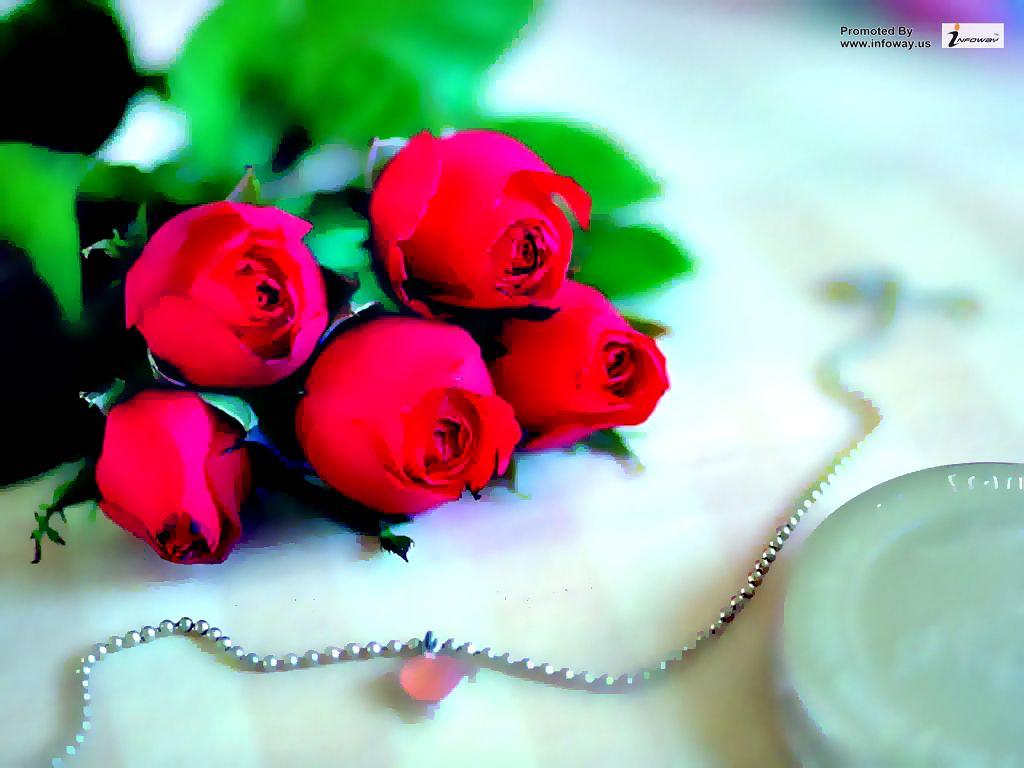 Love Rose Wallpaper Love Love Rose 501717 Hd Wallpaper