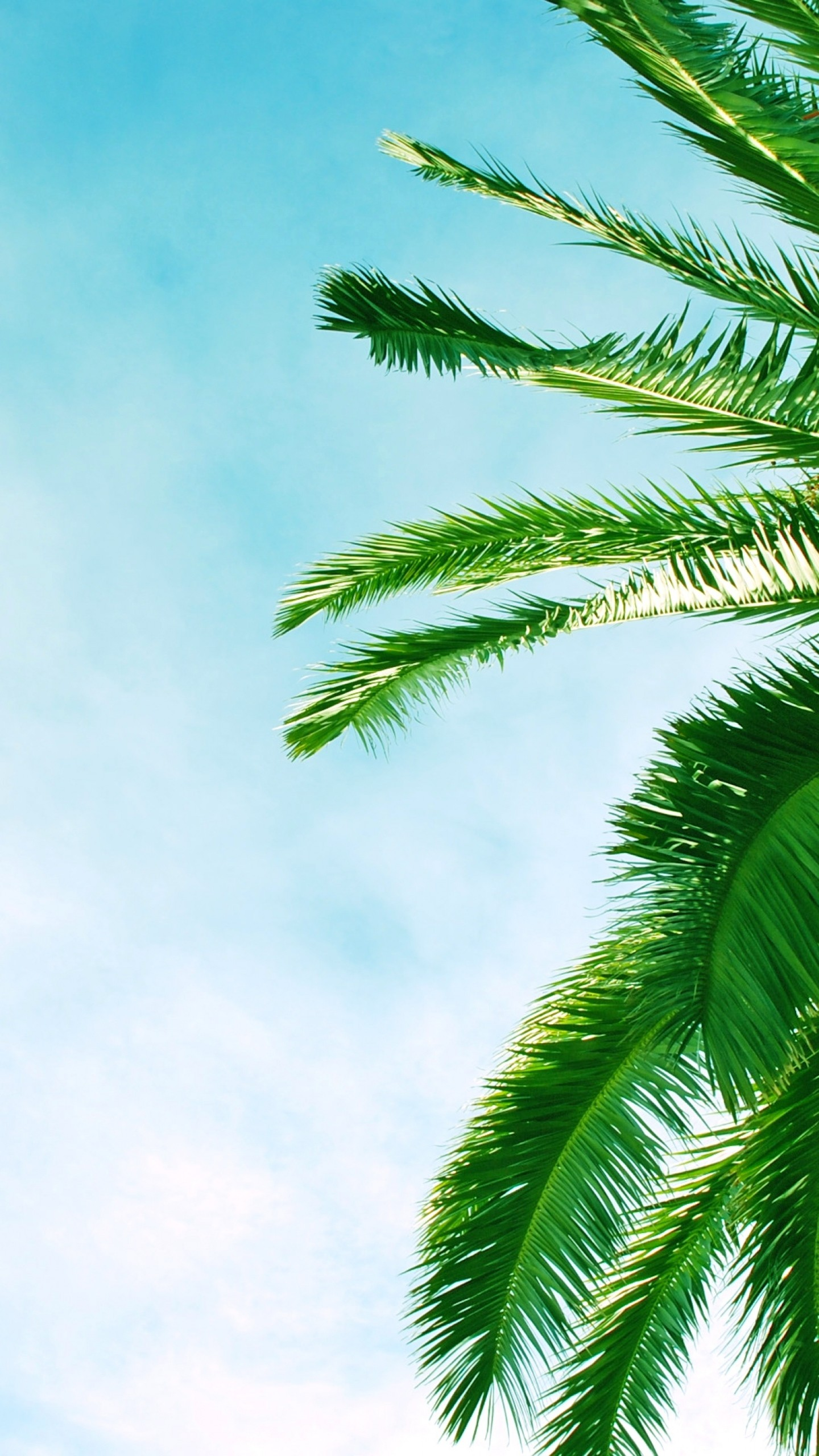 Preview Wallpaper Palm Tree, Krone, Branches, Leaves, - Palm Tree Leaves Hd , HD Wallpaper & Backgrounds