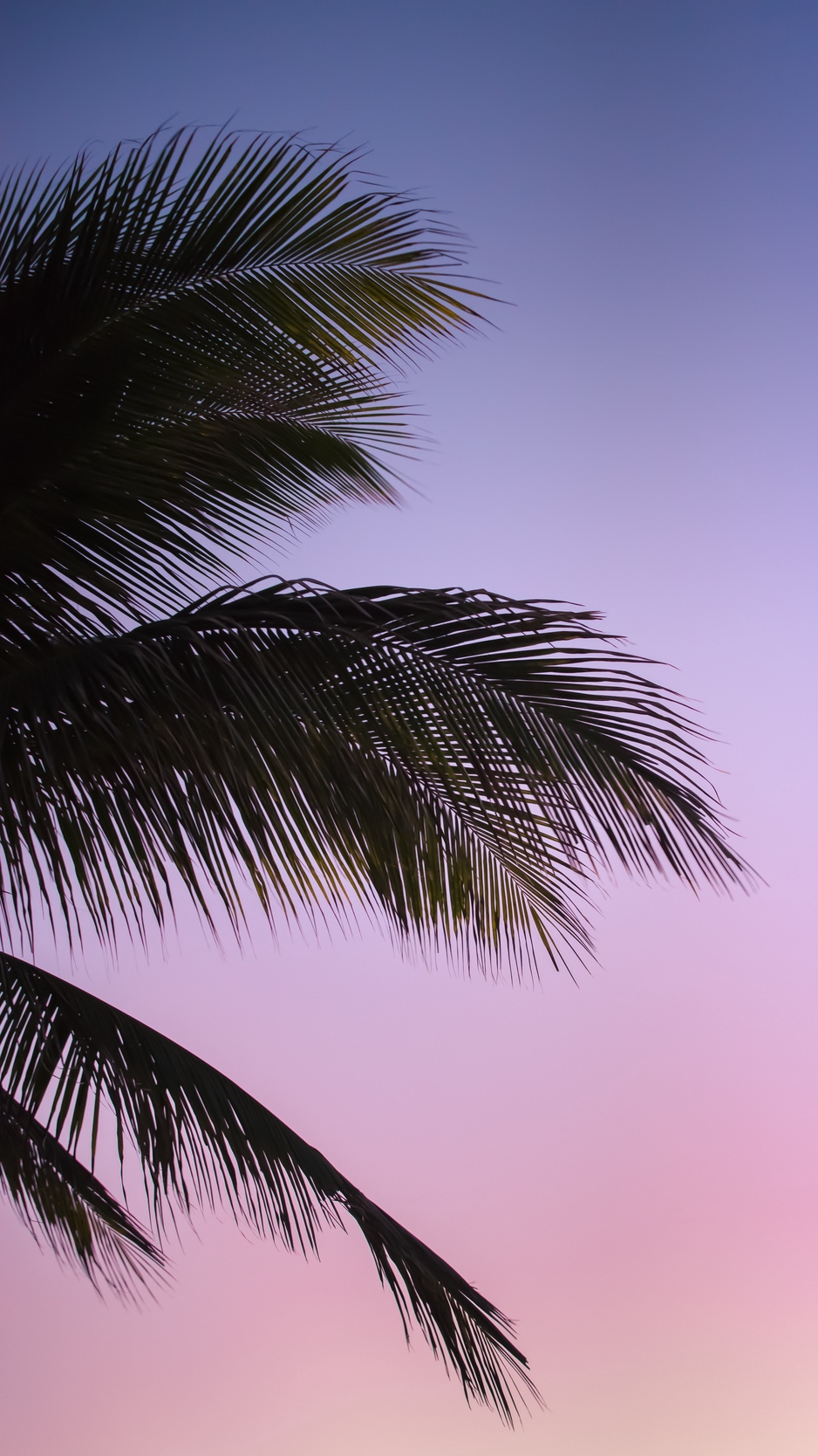 Wallpaper Branch Palm Leaves Sky Sunset Evening Palm Leaves Hd 502907 Hd Wallpaper Backgrounds Download Find over 100+ of the best free tropical leaves images. wallpaper branch palm leaves sky