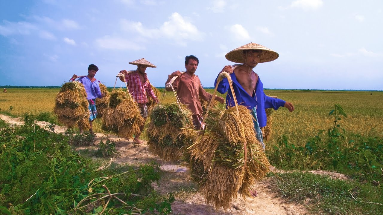 Nature Beauty Of Bangladesh - Nature Pic Of Bangladesh , HD Wallpaper & Backgrounds