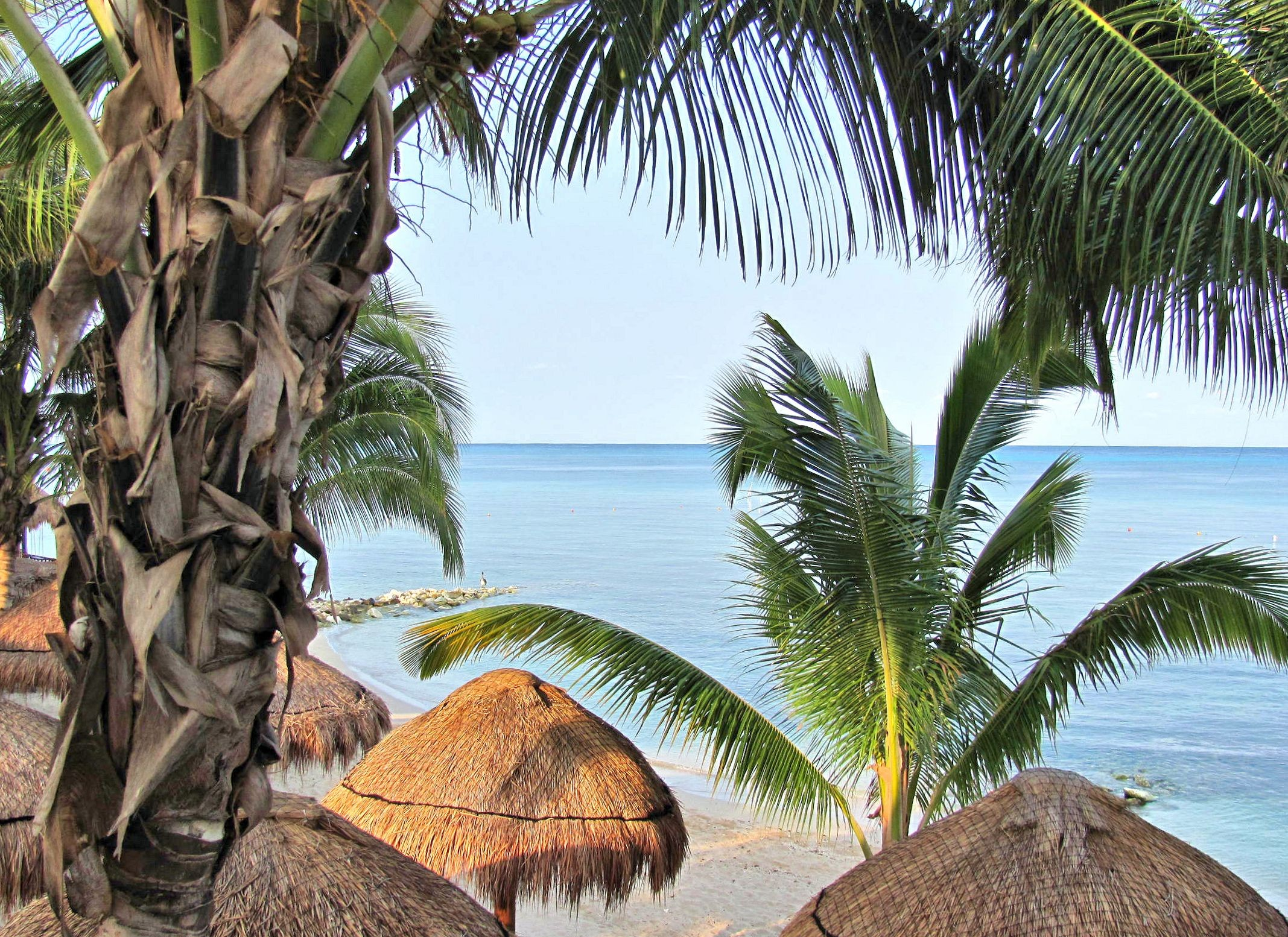 Palms Mexico View Early Blue Paradise Island Bech Nature - Attalea Speciosa , HD Wallpaper & Backgrounds