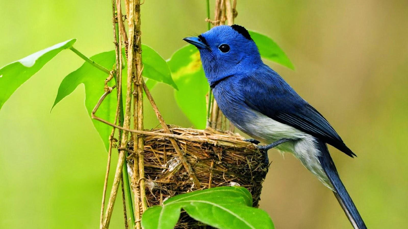 Wallpaper Gerak Gambar Burung Bird Full Hd 540713 Hd