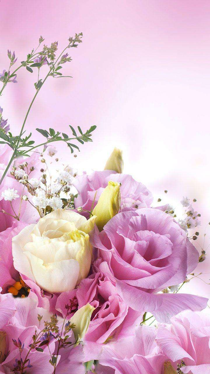 Pink Wallpaper For Android Rose Types Of Flowers New