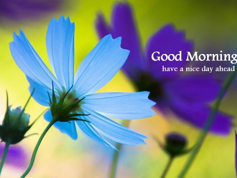 Good Morning - Blue Flower-wg16153 - Have A Nice Day Good Morning , HD Wallpaper & Backgrounds