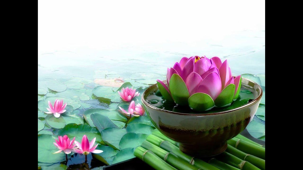 Pink Lotus Live Wallpaper - Beautiful Lotus Flower Hd , HD Wallpaper & Backgrounds