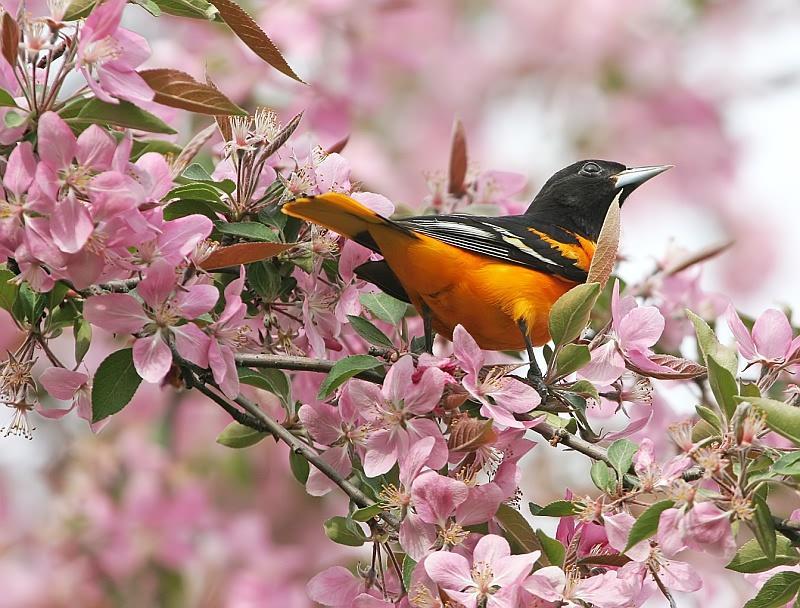 Bird Beautiful Pink Flower - Photography , HD Wallpaper & Backgrounds