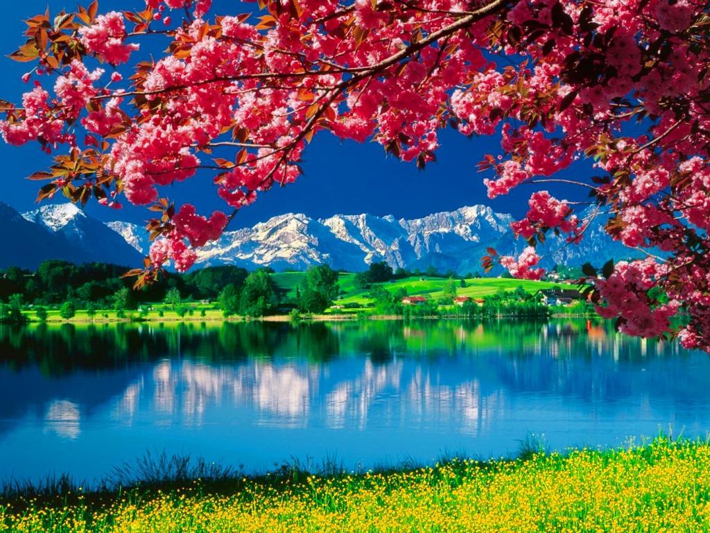 Nature Wallpaper - Beautiful Wallpapers Of Nature For Desktop Free Download , HD Wallpaper & Backgrounds