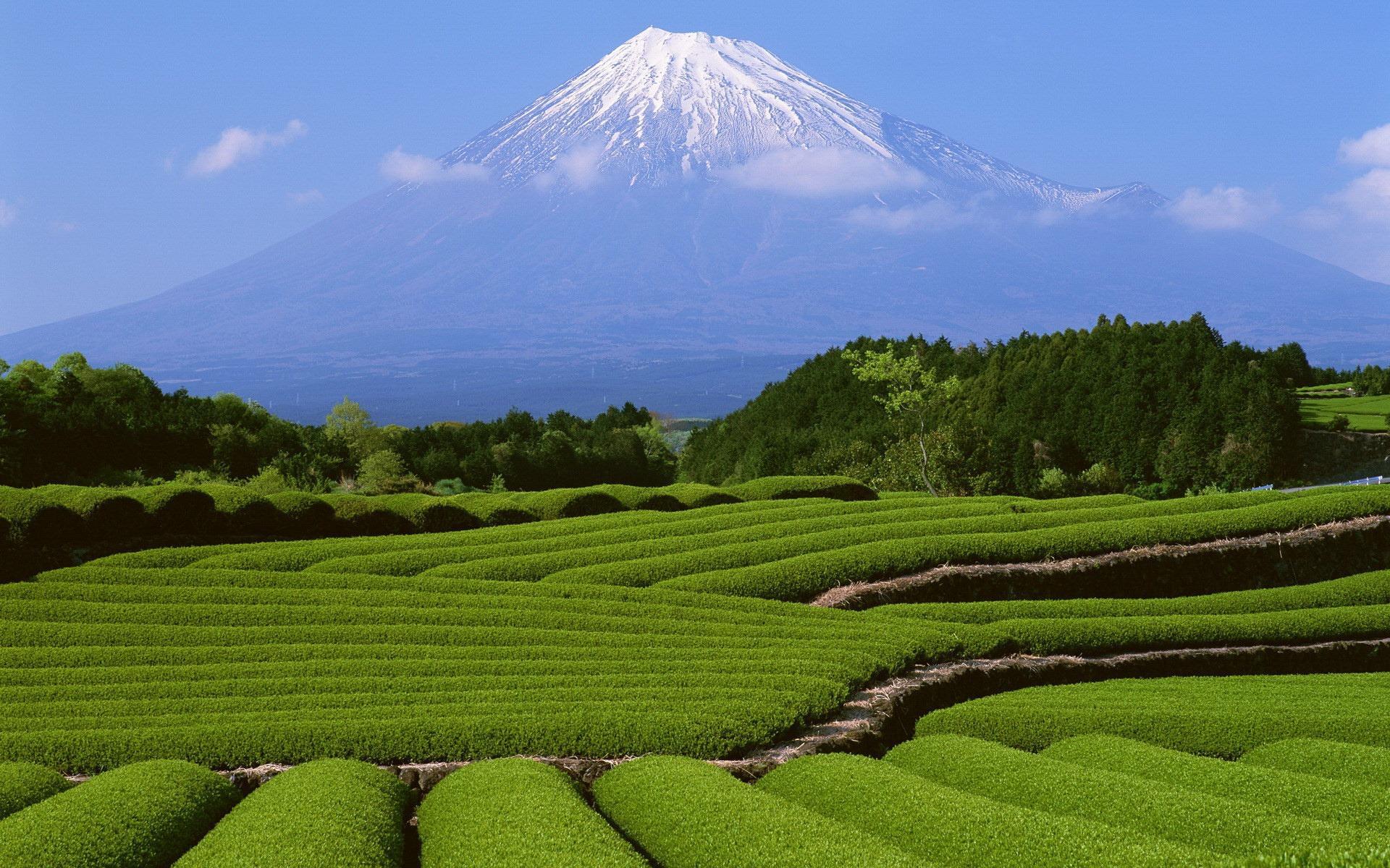 Flowers Gardens Wallpapers For Desktop Full Size - Fuji Mountain , HD Wallpaper & Backgrounds