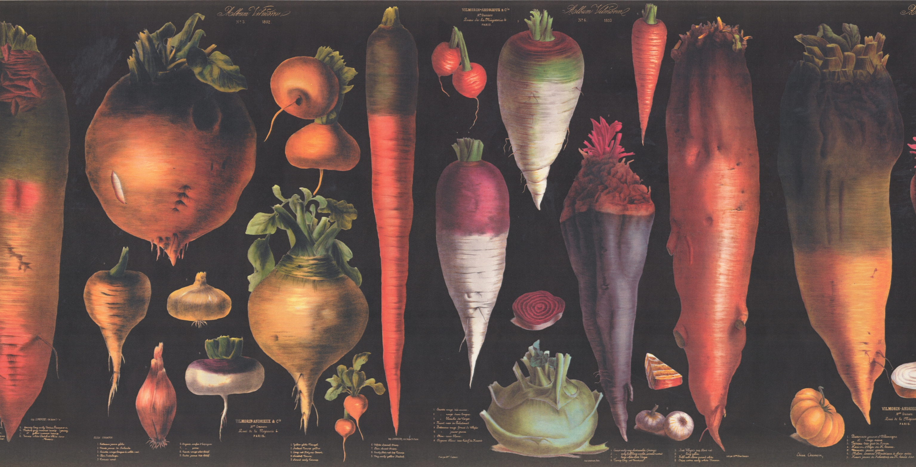 Vegetables Explained Educational Black Extra Wide Wallpaper - Daikon , HD Wallpaper & Backgrounds