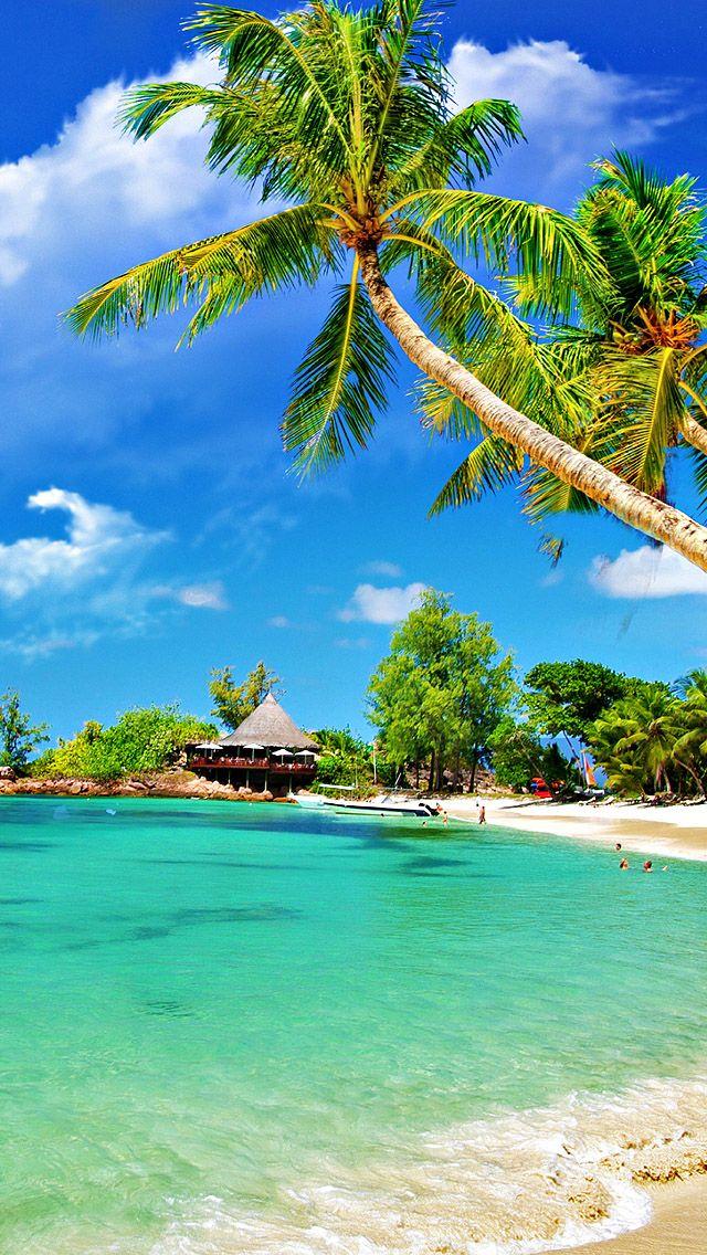 Tropical Palm Beach Tropical Beach Wallpaper Iphone