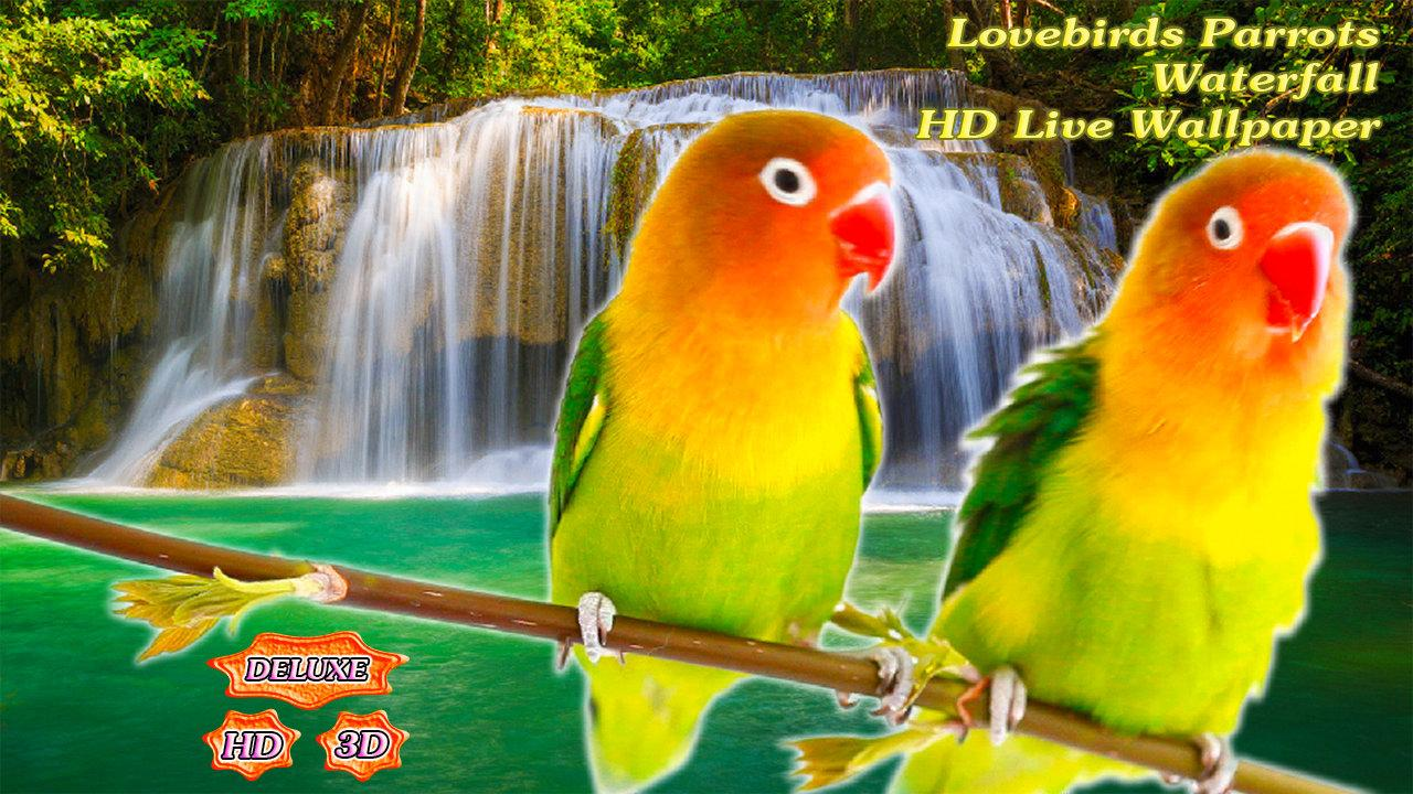 3d Parrot Love Birds Live 575934 Hd Wallpaper Backgrounds
