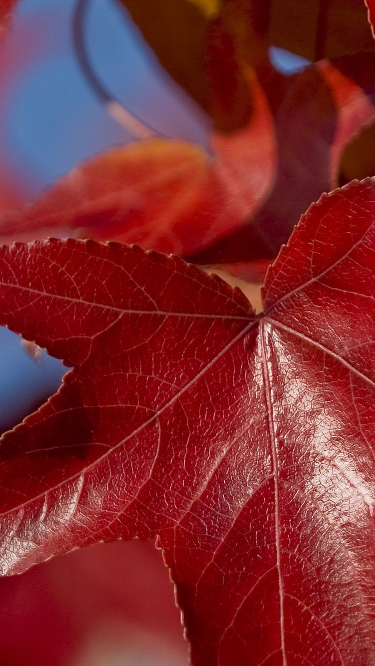 Wallpaper For Iphone Iphone 6 Wallpaper Fall Leaves Red