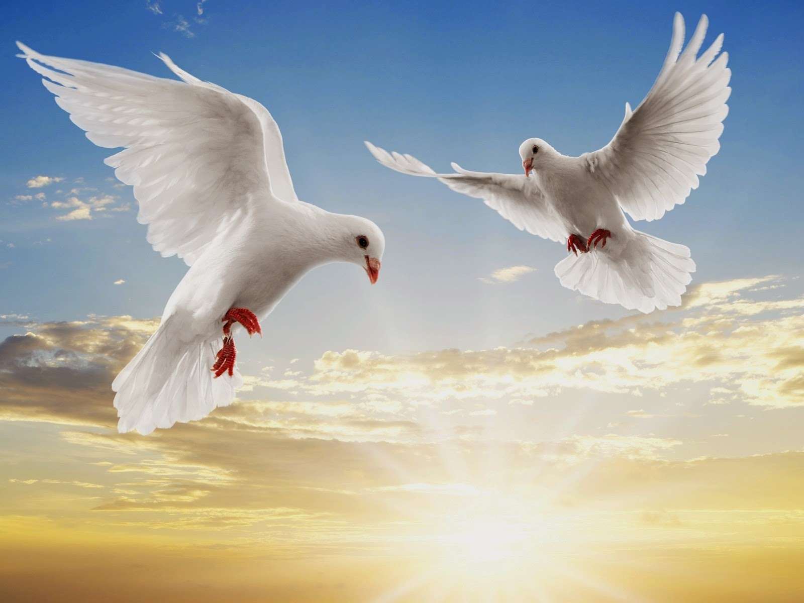 Wallpaper All Photos - Birds Flying In The Sky Hd , HD Wallpaper & Backgrounds