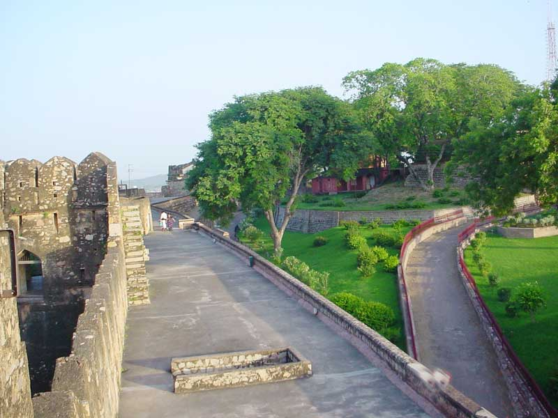 Jhansi Fort Photo Gallery - Tree , HD Wallpaper & Backgrounds
