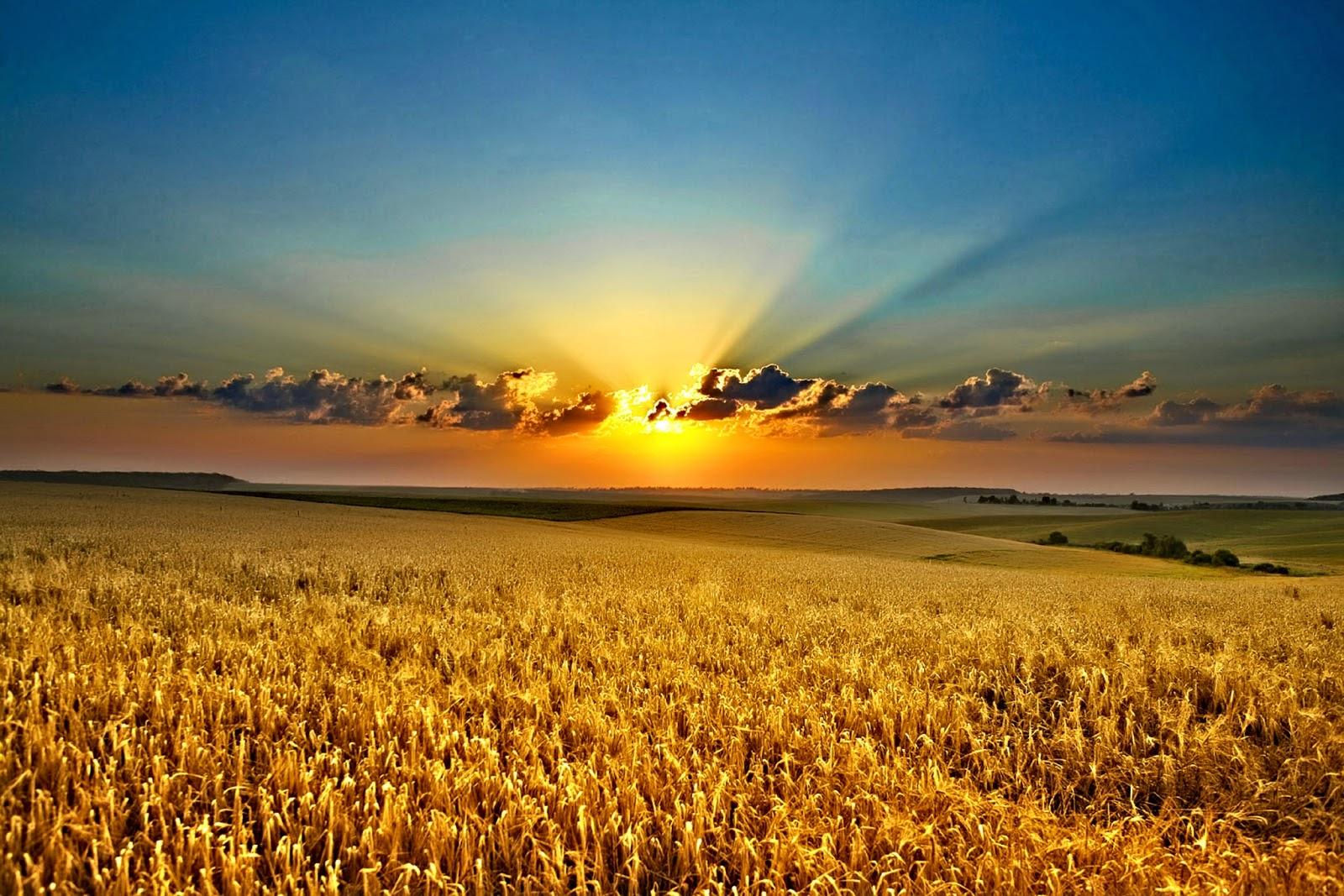 Pemandangan Hd Field Sunset Hd HD Wallpaper