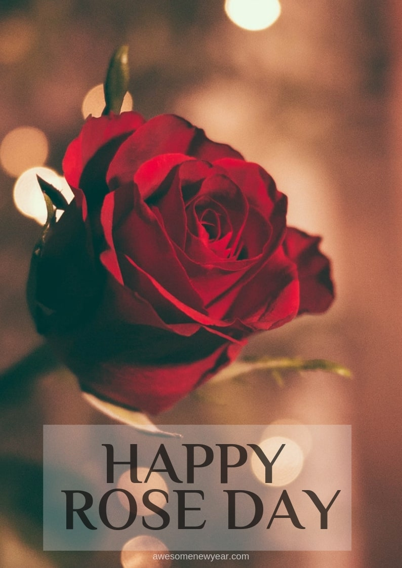 Happy Rose Day Images - Wishes Happy Rose Day 2019 Images Download , HD Wallpaper & Backgrounds