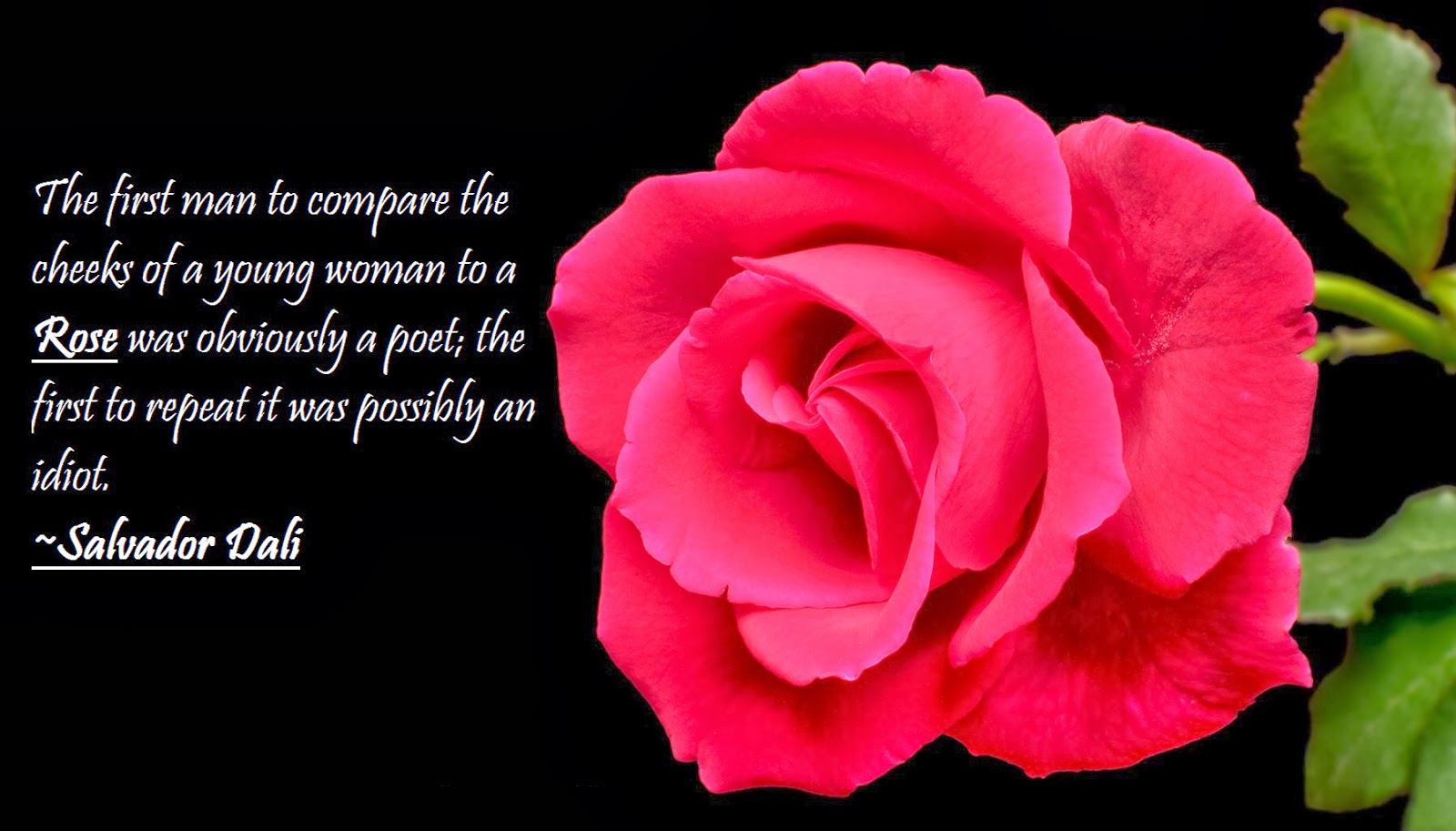 Quotes Related To Rose , HD Wallpaper & Backgrounds